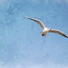 Seagull by Amar-Images