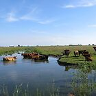 Cows looking for cool water by ienemien
