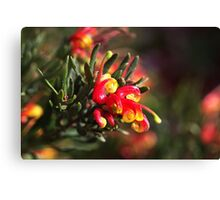 Ground Cover Grevillea Canvas Print
