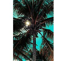 Palm tree with Retro summer filter effect Photographic Print