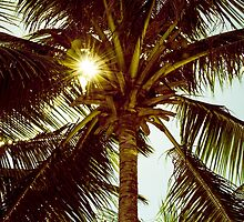 Palm tree with Retro summer filter effect by Stanciuc