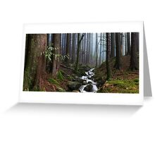 Misty Forest Stream Greeting Card