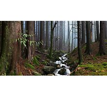 Misty Forest Stream Photographic Print