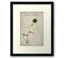 Echinops ritro 'Veitch's Blue' Framed Print