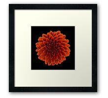 Beautiful Dahlia flower design Framed Print