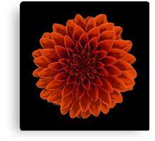 Beautiful Dahlia flower design Canvas Print