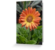 Floral Photography 3 Greeting Card