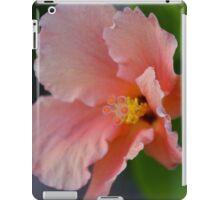 Peach Explosion iPad Case/Skin