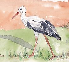 White Stork (Ciconia ciconia) by Maree Clarkson