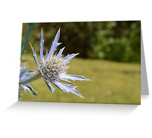Single Thistle Greeting Card