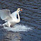Splash Landing!! by Chris Monks