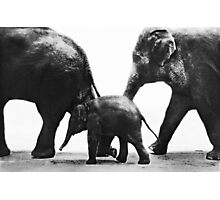 """Elephant Walk"" Photographic Print"
