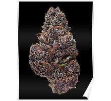 Purple Haze Bud Poster