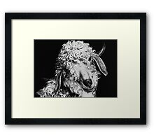 Curly... Framed Print