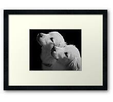Attentive Framed Print
