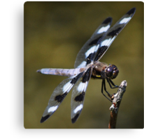 Twelve-spotted Skimmer Canvas Print