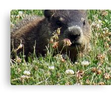 Groundhog, Montreal Canvas Print