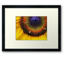 Sunflower, Seeds & Bees Framed Print