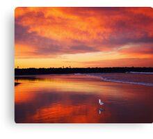 Sunset seagull Canvas Print