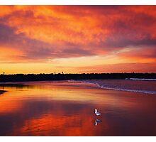 Sunset seagull Photographic Print