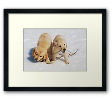 Puppies in Winter Framed Print