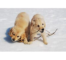 Puppies in Winter Photographic Print