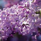 lilac by SIR13