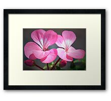 Pink Pelargonium Framed Print