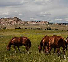Grazing the Northern Cheyenne by Ken McElroy