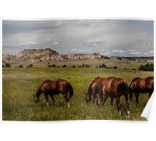 Grazing the Northern Cheyenne Poster
