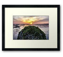 moss head Framed Print