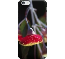 Red and Yellow Eucalyptus Flowers iPhone Case/Skin