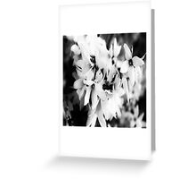 Forsythia in BW Greeting Card