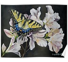 Sunset On A Swallowtail Poster