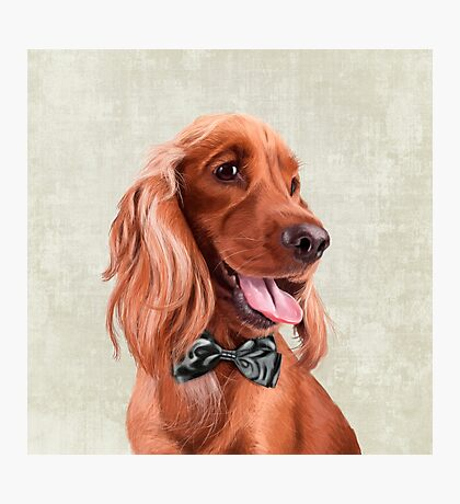 Mr. English Cocker Spaniel portrait Photographic Print