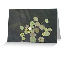 Lily Pad Cute Visitor - A Little Turtle Emerging Among The Waterlilies  Greeting Card