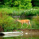 Deer on the Lake by Mechelep