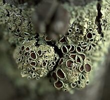 Symbiosis by Ben Loveday