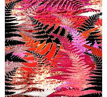 Ferns, Morning Blush Photographic Print