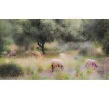 Spanish pastoral scene Photographic Print