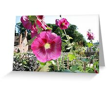 Dream Garden at Dunster Castle and Gardens Greeting Card