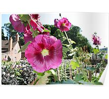 Dream Garden at Dunster Castle and Gardens Poster