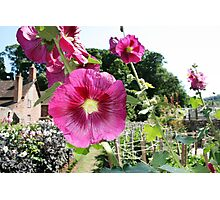 Dream Garden at Dunster Castle and Gardens Photographic Print