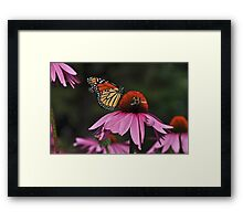 Monarch making friends with a bee... Framed Print