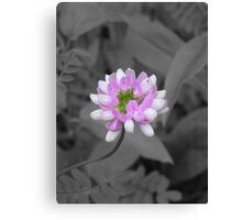Crown Vetch (selective coloring) Canvas Print