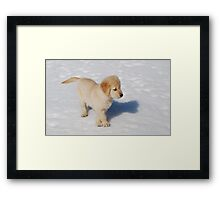 """Golden Retriever Puppy's First Winter"" Framed Print"