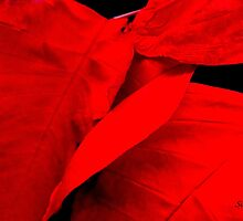 Really Red by Rosemary Sobiera