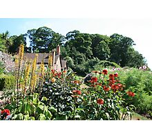 The Dream Garden, Dunster Castle and Gardens Photographic Print