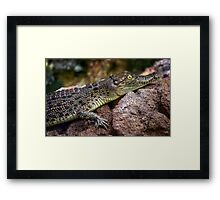 Young  Australian Salt water crocodile. Framed Print