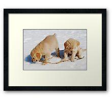 Golden Retriever Puppies First Winter #2 Framed Print